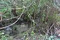 Ravenna Park 17.jpg