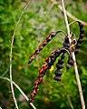 Red Beans (6287392021).jpg