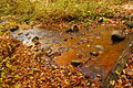 Reflection of Fall Colours on Water - Rouge Valley Park (10279366335).jpg