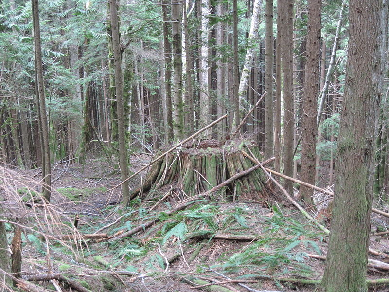 Regrowth - Mount Baker-Snoqualmie National Forest.JPG