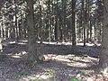 Remscheid - panoramio (12).jpg