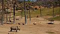 Rhino san diego wild animal park.jpg