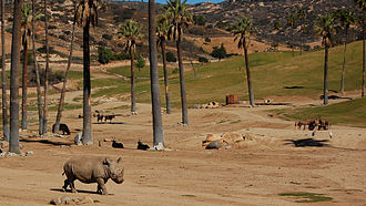 San Diego Zoo Safari Park - Rhinos in the African Plains