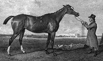 Rhoda (horse) - Rhoda in an 1821 engraving by W. Smith.