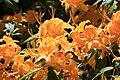 Rhododendronpark Bremen 20090513 214.JPG