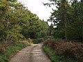 Ride in Bere Wood - geograph.org.uk - 569125.jpg
