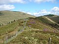Ridge path on Foel y Geifr - geograph.org.uk - 268257.jpg