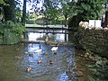 River Windrush at Birdland, Bourton-on-the-Water - geograph.org.uk - 233877.jpg