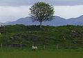 Rocky outcrops near Baileouchdarach - geograph.org.uk - 465055.jpg