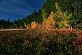 Rogue River-Siskiyou National Forest, Elk Meadow (36275279794).jpg