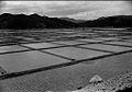 Ruộng Muối & Sông Cầu 1971 (9677344727).jpg