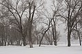 Russian winter, Trees in snow, Rostov-on-Don, Russia.jpg