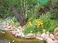 Sárga virágok - Yellow flowers - panoramio (1).jpg