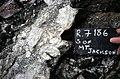 S of Mt Jackson mixed mafic-felsic breccia with tuffisite dyke.jpg