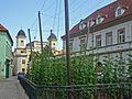 Saaz-Hopfengarten.jpg