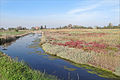 Saint Erasme (Lagune de Venise) (8100571171).jpg
