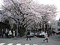 Sakurazaka 01.jpg