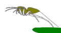 Salticid jumping takeoff n2.png