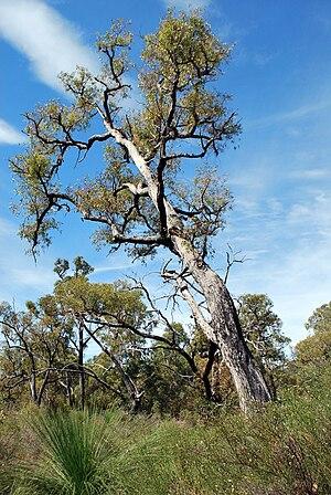 Samson, Western Australia - Samson Park.