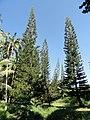 San Juan Botanical Garden - DSC06982.JPG