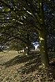 Sand Hall trees - geograph.org.uk - 1520515.jpg