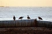 Santa Barbara Sunrise 4798.jpg