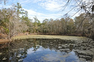 Santa Fe River (Florida) - Image: Santa Fe Sink