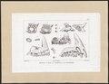 Sargus spec. - kaken - 1700-1880 - Print - Iconographia Zoologica - Special Collections University of Amsterdam - UBA01 IZ13100023.tif