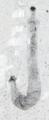 Scathascolex 83939d.png