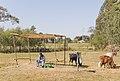 Scenes from Bahir Dar, Ethiopia (2209378849).jpg