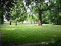 Schlosspark Köpenick - Wiese 2.jpg