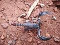 Scorpion (4).jpg