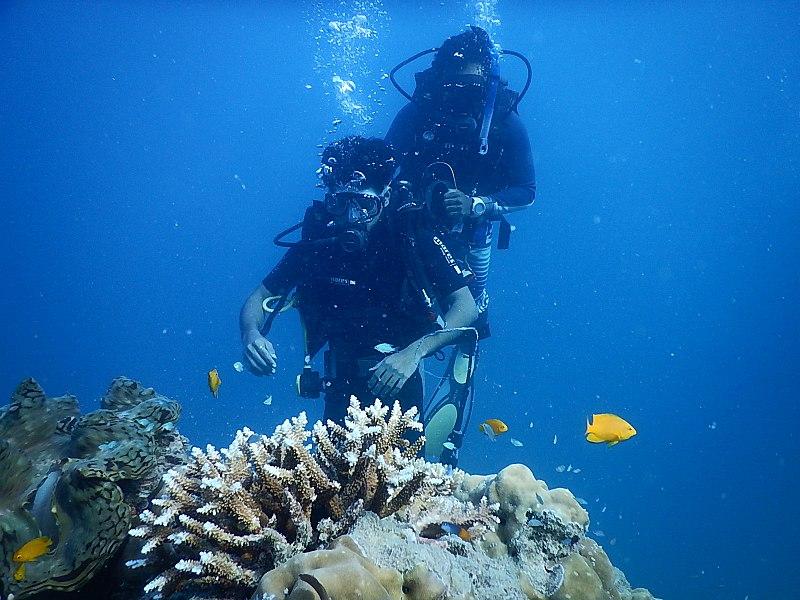 File:Scuba Diving Havelock.jpg