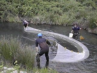 Seine fishing