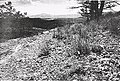 Sensitive plant species surveys, Butte District, Beaverhead and Madison Counties, Montana (1996) (20484738446).jpg