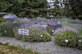 Sequim, WA — Lost Mountain Lavender Farm — Sample Garden.jpg
