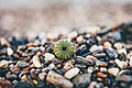 Shell on pebble beach (Unsplash).jpg