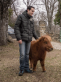 Shetland pony and young man in Madrid countryside.png