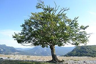 Sierra de Urbasa.jpg