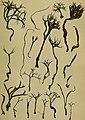 Sitzungsberichte (1908) (14760311966).jpg