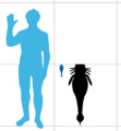 Slimonia Size.png