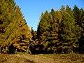 Slovakia autumn 20.JPG