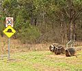 Slow down, Giant snails crossing? (337095799).jpg
