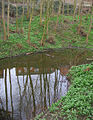 Small mere in woodland by Wistaston Green - geograph.org.uk - 365668.jpg