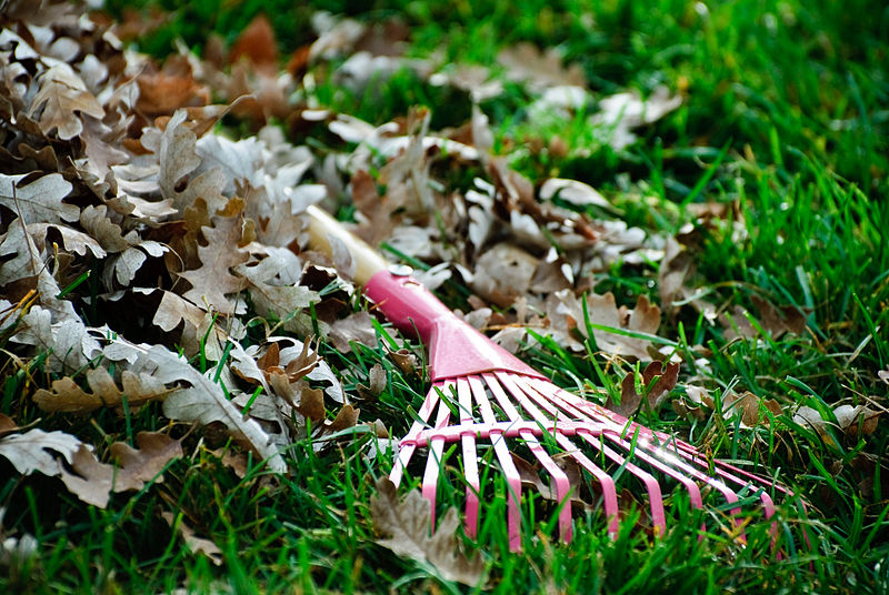 File:Small pink leaf rake.jpg