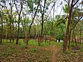 Snap from Peechi Forest area 140219.jpg