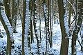 Sneeuw in Meerdaalbos - 372806 - onroerenderfgoed.jpg