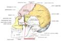Sobo 1909 39 - Zigomatico-temporal suture.png