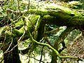 Soonwald - Urwald von morgen - panoramio (2).jpg