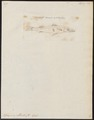 Sphyraena obtusata - 1700-1880 - Print - Iconographia Zoologica - Special Collections University of Amsterdam - UBA01 IZ13400149.tif